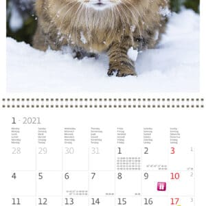 Wall calendar 30x30 Cats 2021 January