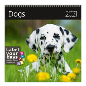 Wall calendar 30x30 Dogs 2021