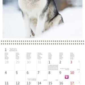 Wall calendar 30x30 Dogs 2021 January