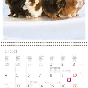 Wall calendar 30x30 Little Fun 2021 January