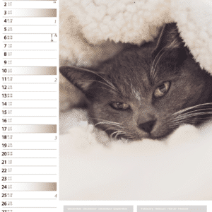Wall calendar Cats 2021 January