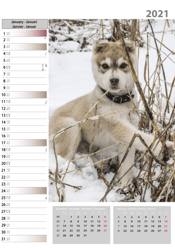 Wall calendar Dogs 2021 January