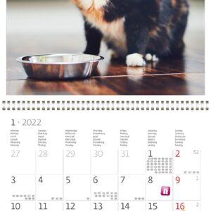 Wall calendar Cats 2022 January