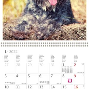 Wall calendar Dogs 2022 January
